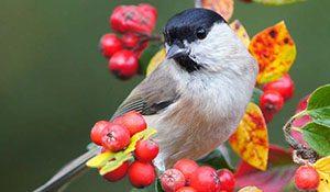 Attracting birds to the garden