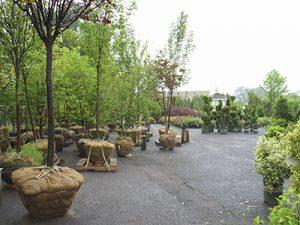 Tree Planting Sale