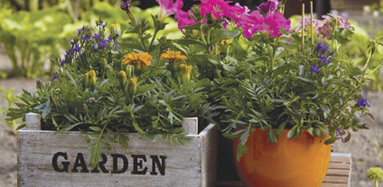 Bucks County's Premiere Garden & Patio DestinationWelcome to Feeney's