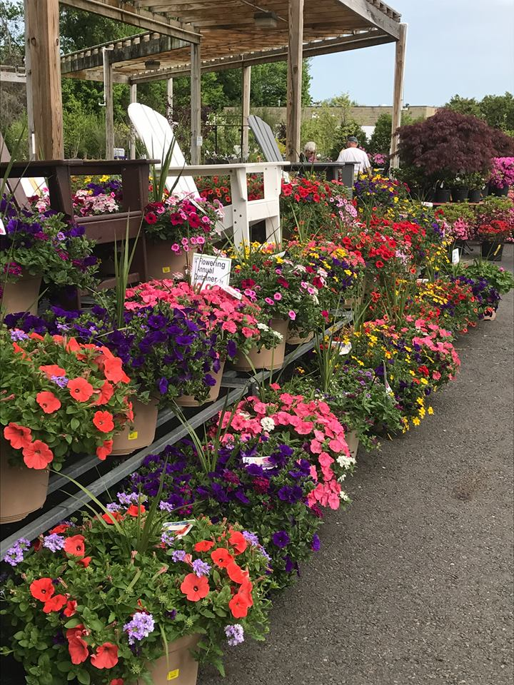 Image of rows of flowers for sale at Feeney's in Feasterville, PA