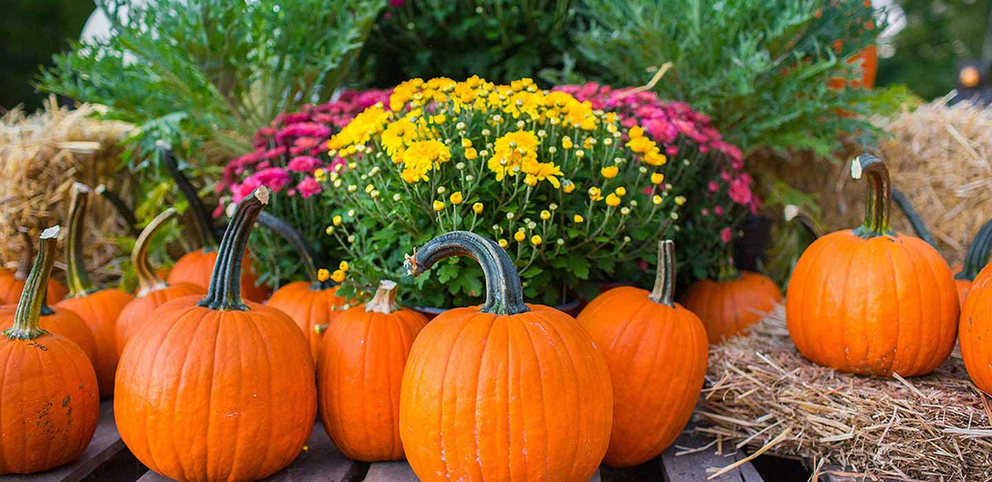 With cooler weather it's a great time to decorate!Lots of Pumpkins, Cabbage and Kale, Mums, and more!